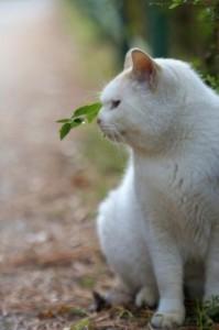 たたずむネコ
