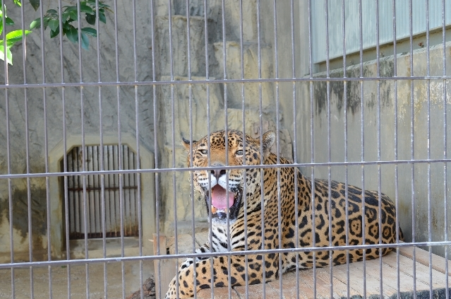 東山動物園の動物