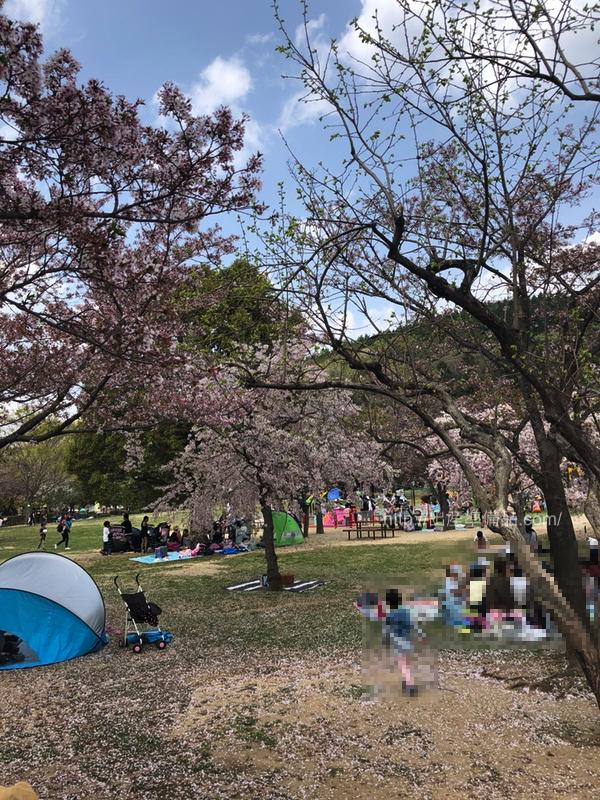 グリーンピア春日井の桜